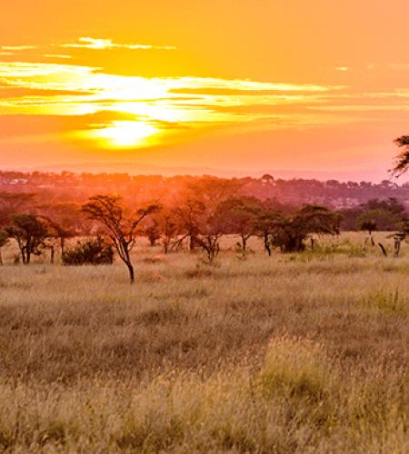 Vacances Tanzanie : découvrir le parc du Serengeti