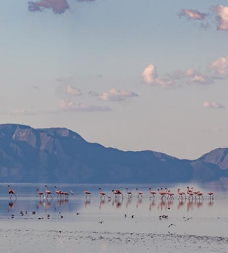Vacances Tanzanie : découvrir le lac Natron